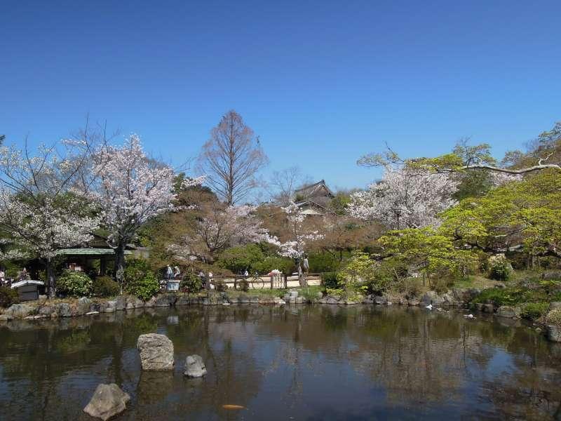 At Maruyama Park