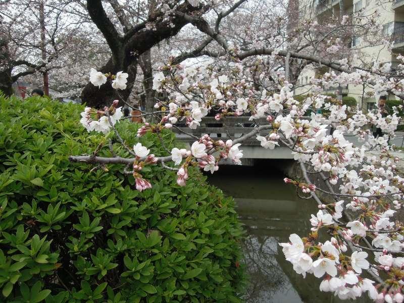 Near Ginkaku-ji Temple