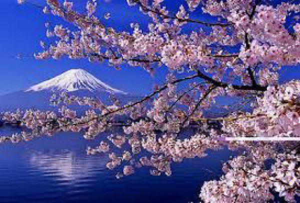 Mt. Fuji ( spring )