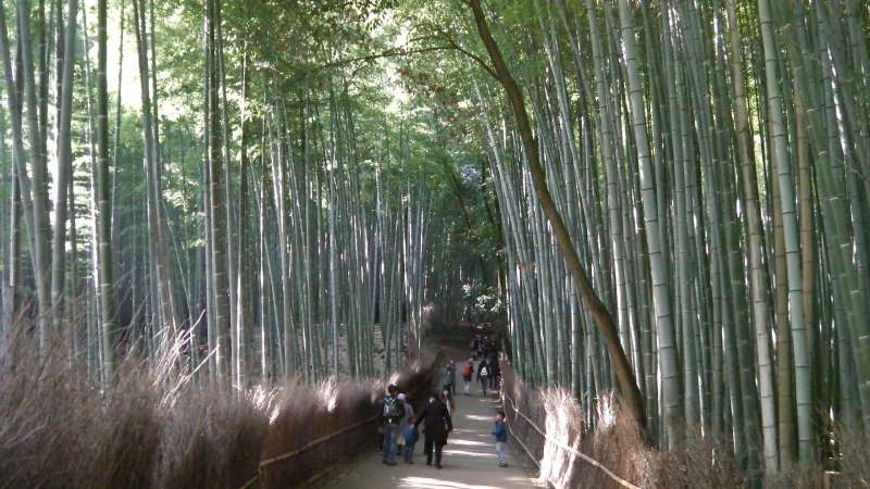 2. Golden: Bamboo forest in Sagano area