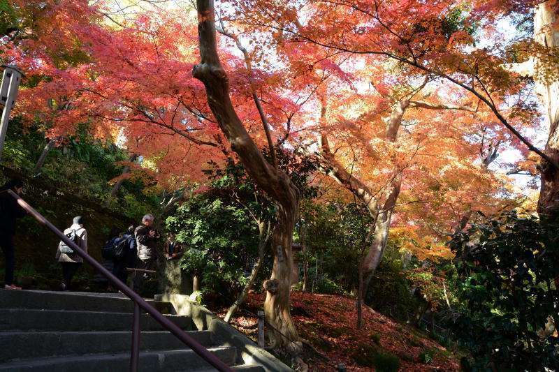 Option free of charge : Hase-dera Temple (admission fee 300 yen)