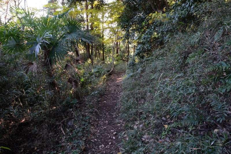 Narrow path in Kamakura-yama Mountain