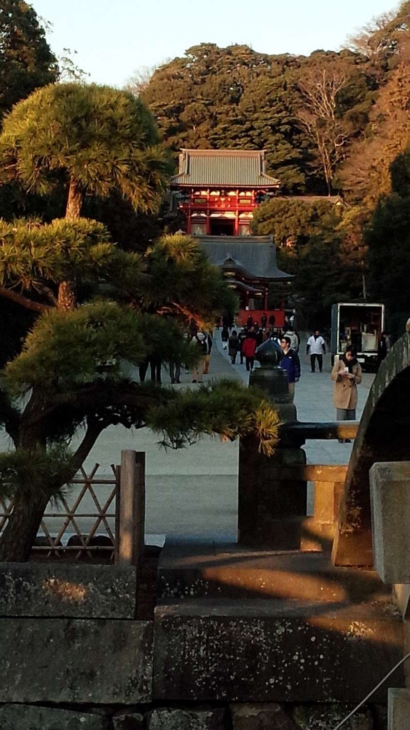 Tsurugaoka Hachimangu Shrine, the landmark shrine in Kamakura.