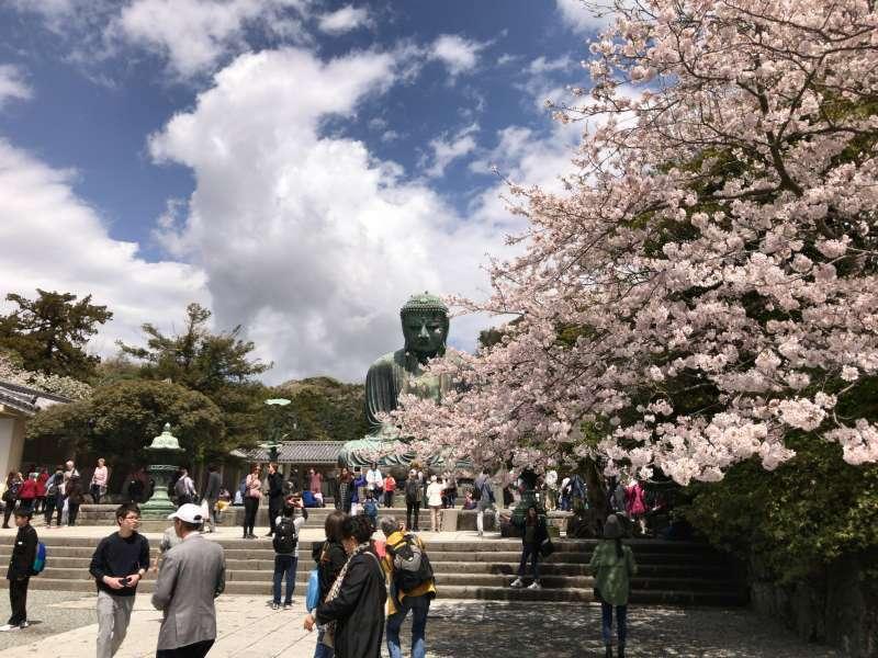 Kotokuin Temple where Daibutsu, or the Great Buddha Statue sitting in Kamakura