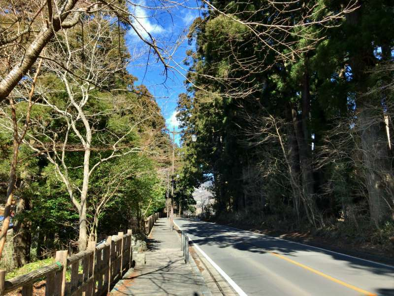 The old highway of Tokaido Road, lined with cedars and other trees