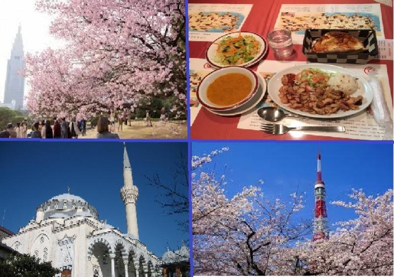 Cherry Blossom|Halal Lunch|Tokyo Camii