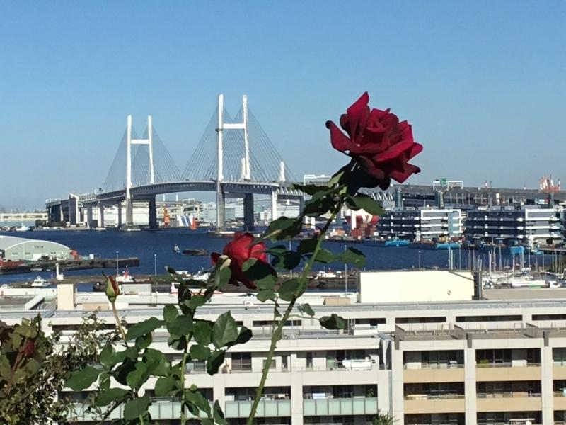 Bay Bridge, major bridge in Yokohama, view from Yamate Hill.