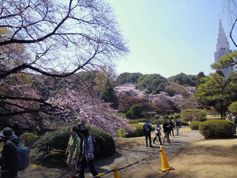 Shinjuku Gyoen was once a garden for the Imperial Family. Today, it is the popular scenic place of rest and  relaxation for people over the world.