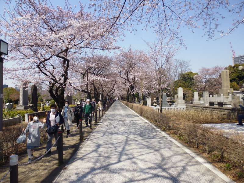 On the route, from Meiji Jingu Gaien to the Nezu Art Museum, we are to go through the Aoyama cemetery. Many people are going for a walk in the ground.