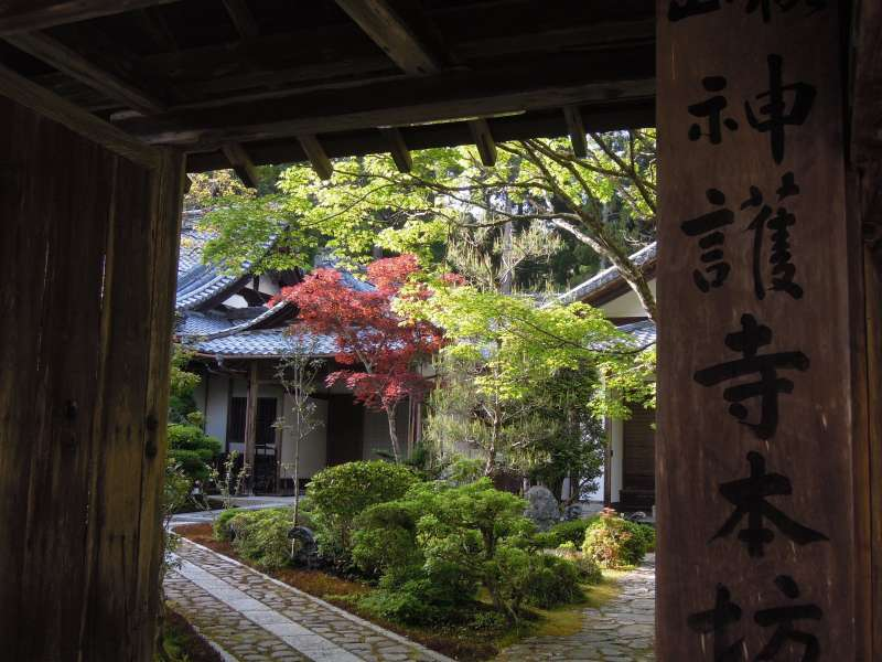 At Jingo-ji Temple, Takao
