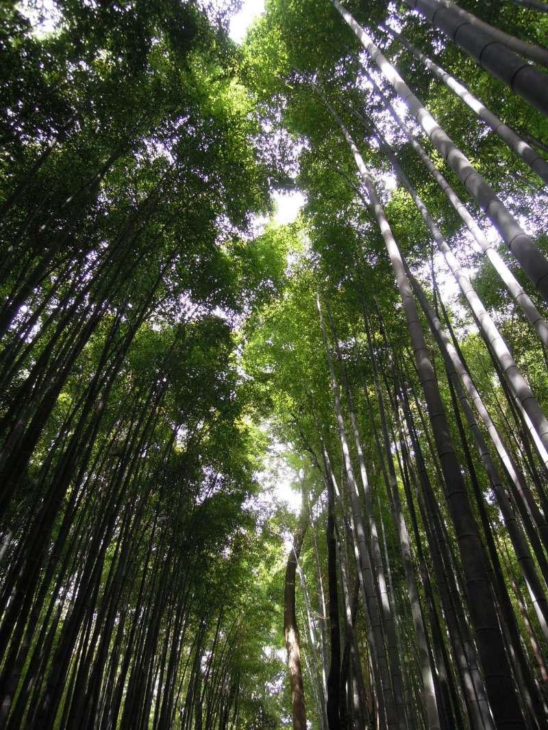 At Bamboo Forest in Arashiyama