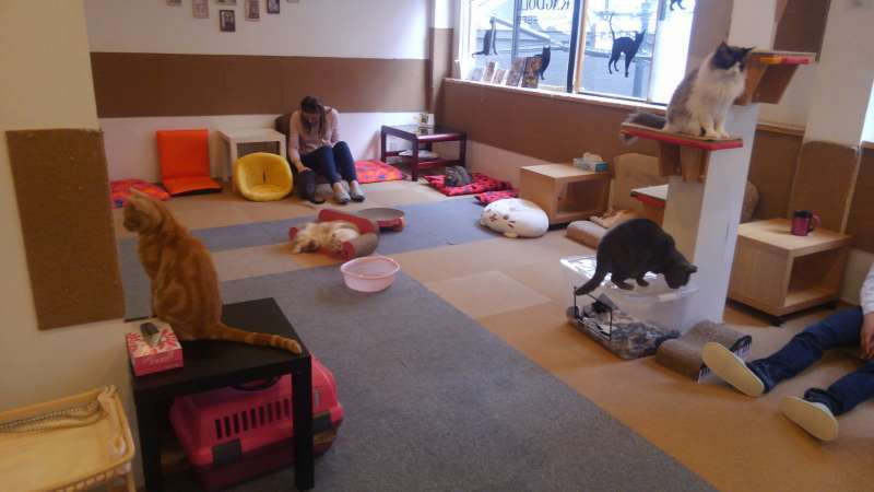 Cat cafe in Nipponbashi area