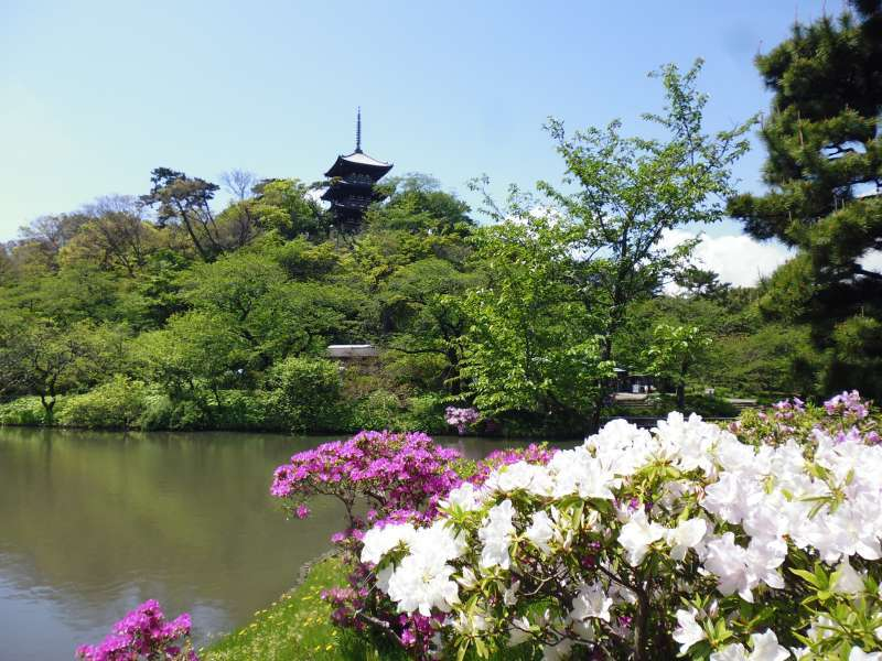 Sankeien is a Japanese-style garden. Flowers are beautiful throughout the year.