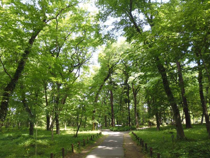 Wooded area in Jindai Botanical Garden