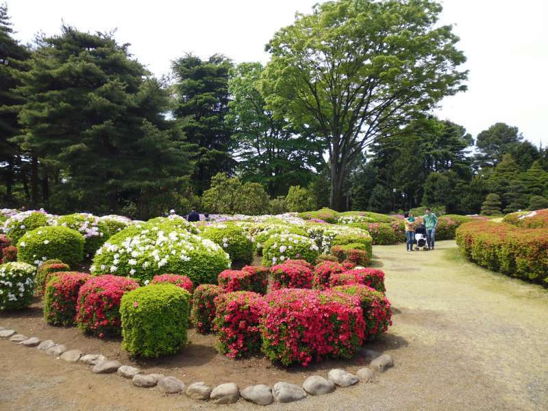 Azaleas are in full bloom in early May in Jindai Botanical Garden