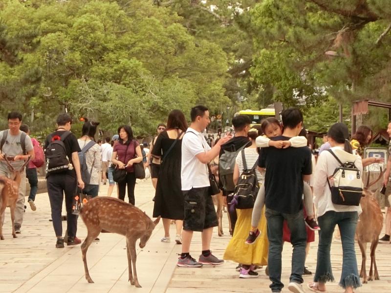 Half A Day Kyoto / Nara Tour