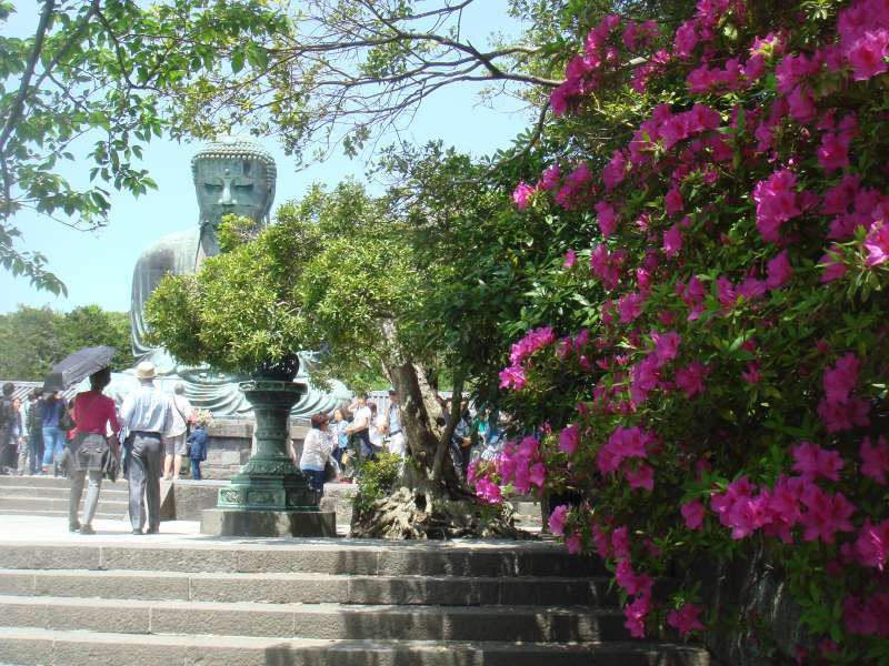 This is colorful azalea in the Kotokuin temple in May.