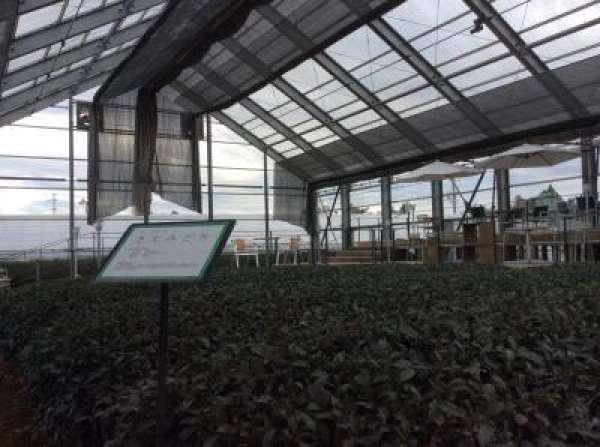 Inside the Terrace Garden