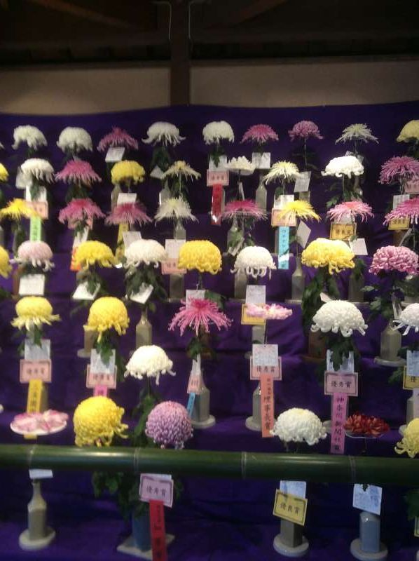 Chrysanthemum Exhibition consisting of about 500 items, held in the Autumn.