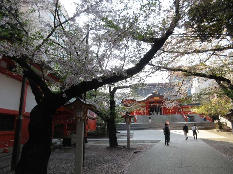 Cherry Blossoms in full bloom at Hanazono-Jinja Shrine