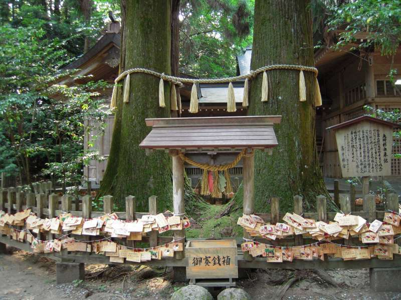 Takachiho shrine.  These two Japanese ceders' roots are connected each other.  Hold your partner's  hand and walk around these ceders three times, your relationships will get stronger and deeper.