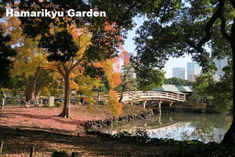 3. Wonderful Hamarikyu Garden
