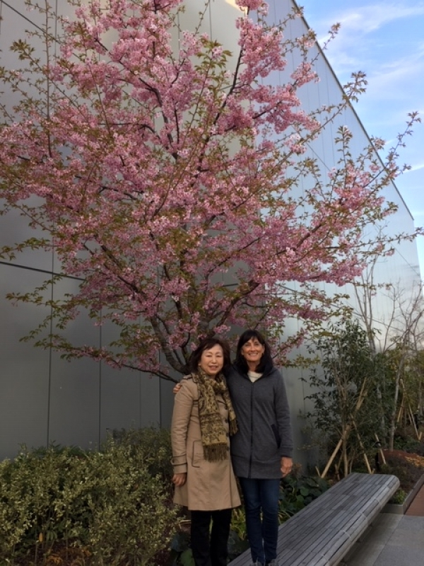 With a lady from the U.S.A. enjoying Kawazu Cherry Blossom in Ginza, Feb. 2019