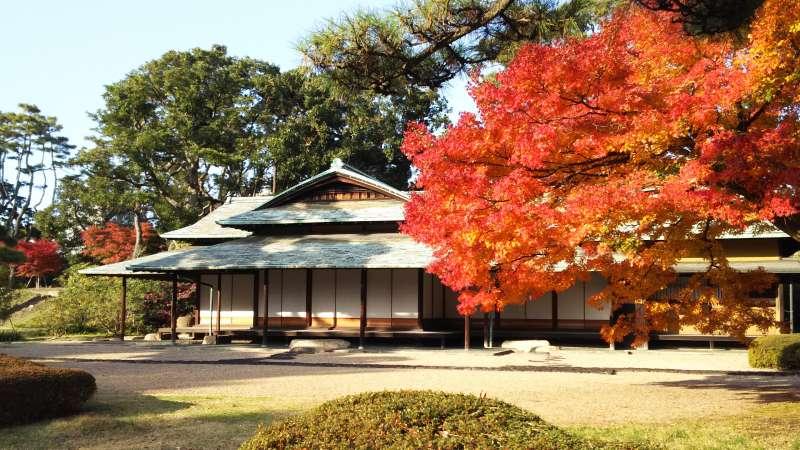 Higasigyoen garden ( Imperial garden.)