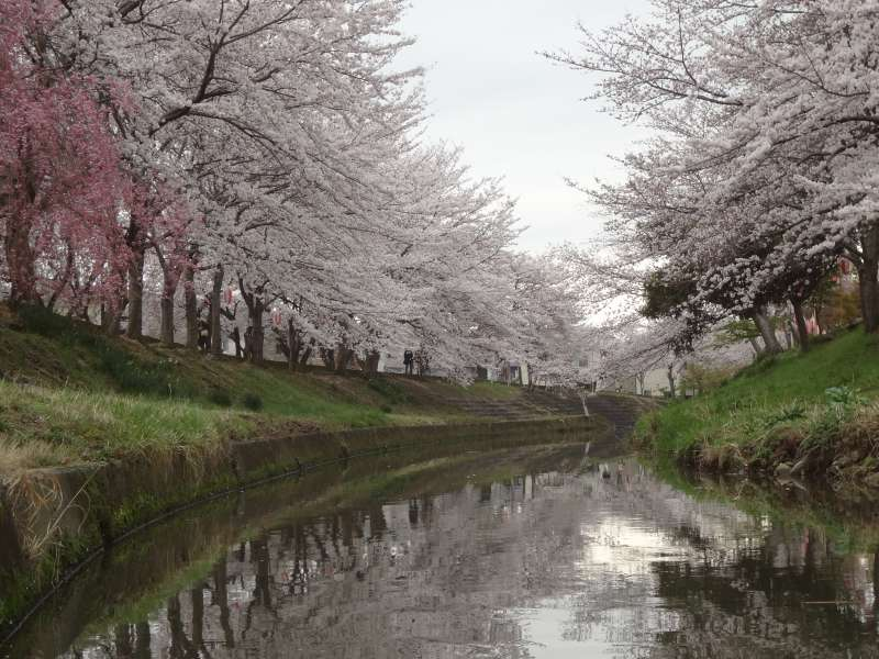 Cherry blossom at Sahogawa River.Best timing to see the blossoming is around the first week of April.