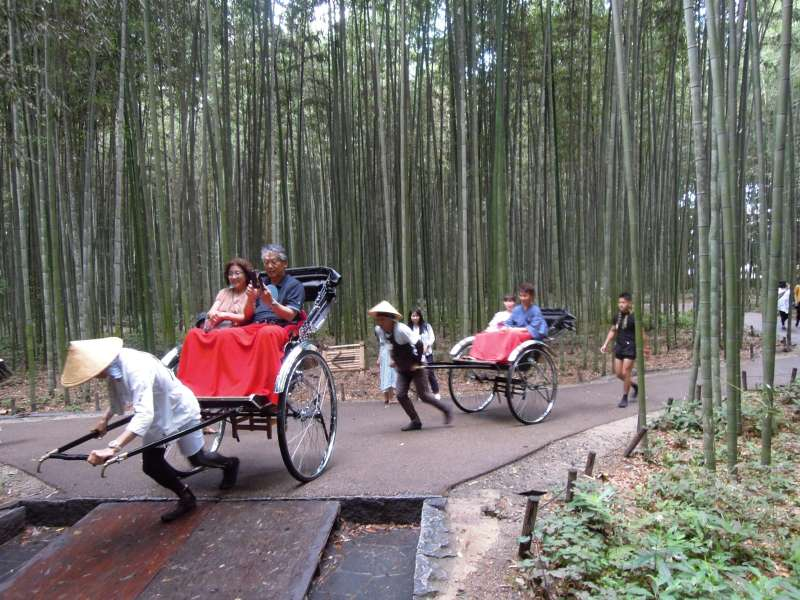 At Bamboo Grove, Arashiyama