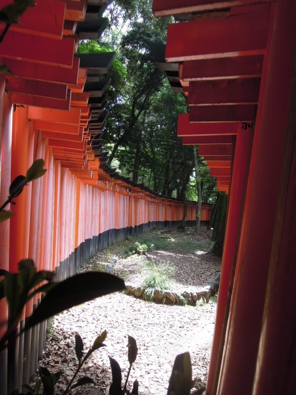 Fushimi Inari Grand Shrine,  A thousand Trii Gates.