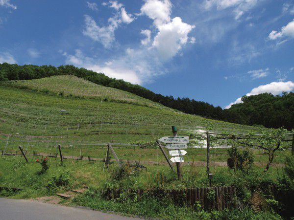 Let's enjoy tasting wine and lovely view at Coco Farm & Winery