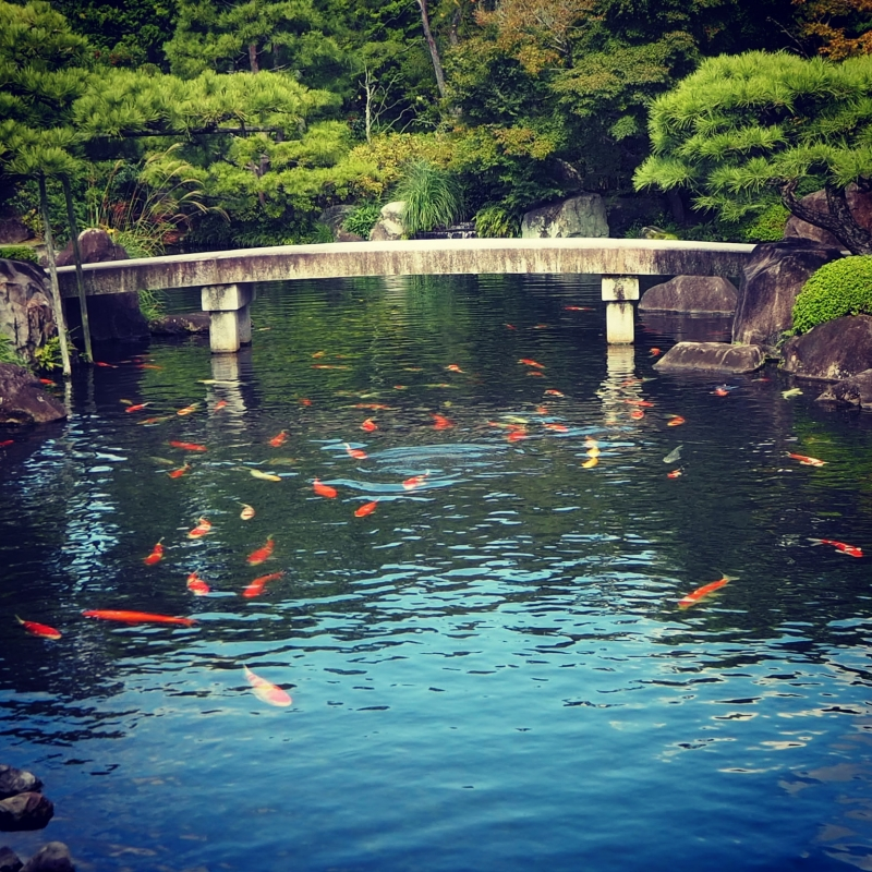 Carp fish at KOUKOEN Garden