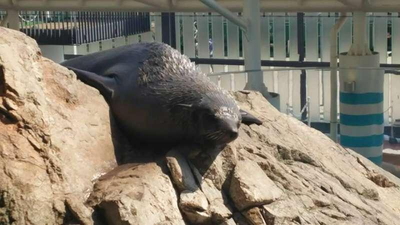 Sea lion@Kyoto Aquarium