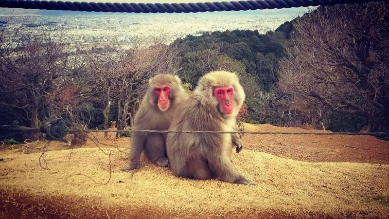 Monkey Park & Kyoto city view