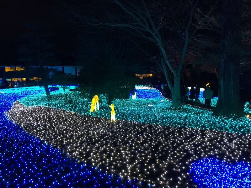 Nara-rurie Festival in February