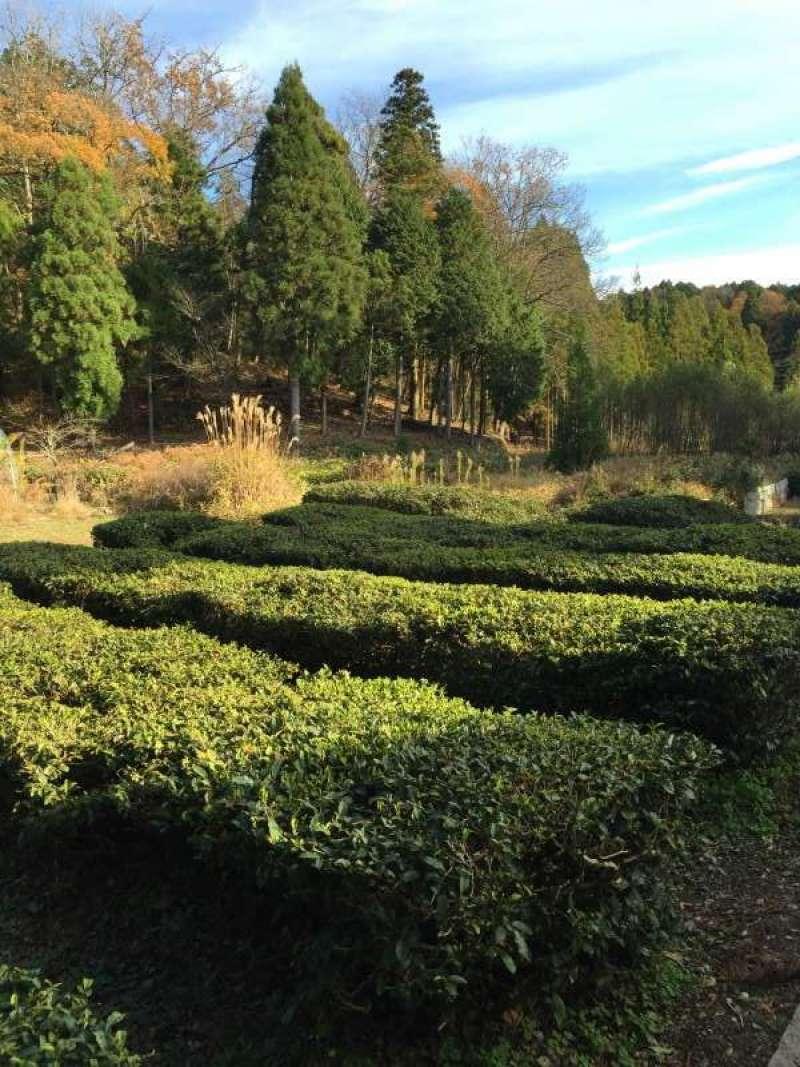 [Nov.] The Tea Gargens, an Approach to Keisoku-ji Temple