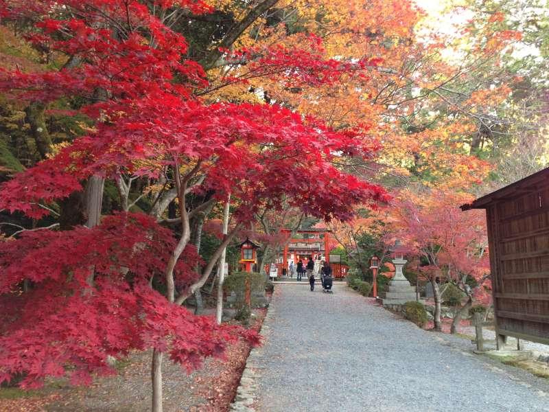 [Dec.] Autumnal Leaves at Keisoku-ji Temple (1 of 2)