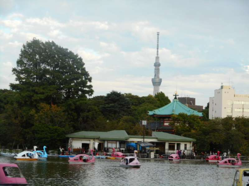 Shinobazu Pond: Cycle boat 600 yen per 30 minutes/ Swan boat 700 yen per 30 minutes