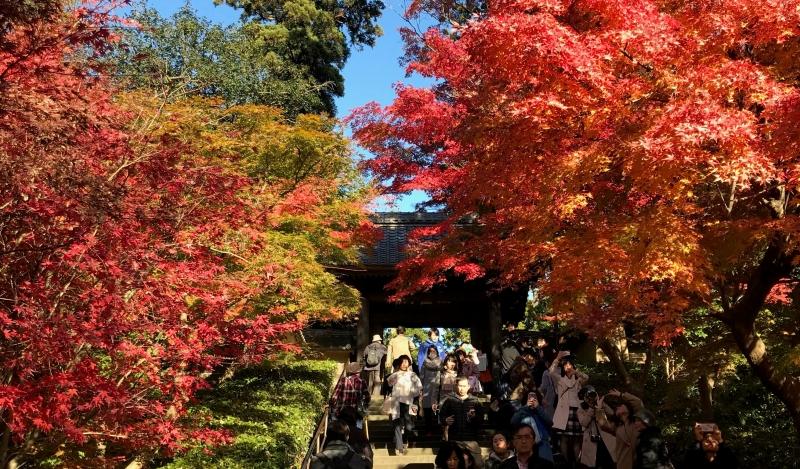 Autumun leaves (Engaku-ji temple N1 - 25 Nov. 2017 in Dec.)