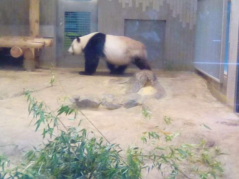Option: Ueno Zoo