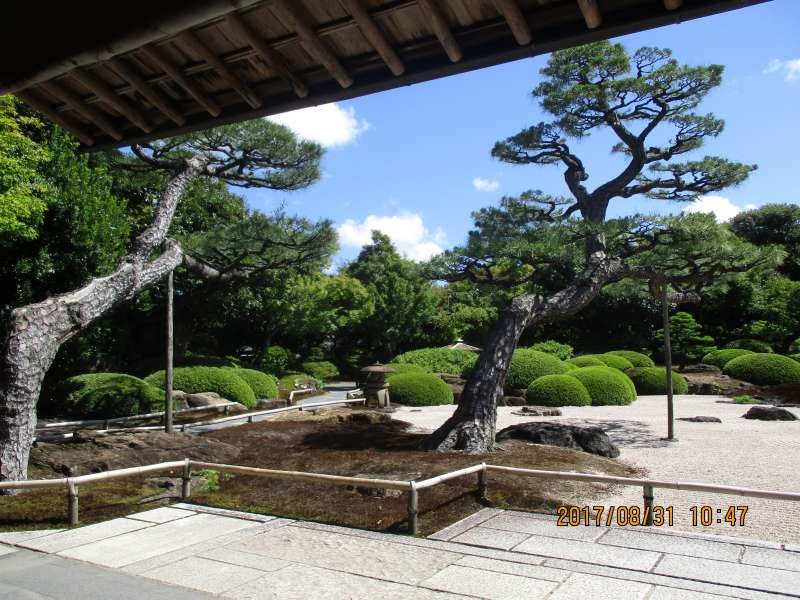 Well-maintained Pine Tree