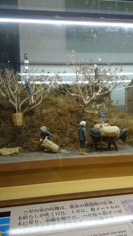 This display shows us people's collecting berries from  sumac trees. The berries are crushed into a fine powder, which is steamed and then wax is extracted. The crude wax is bleached under the sunlight to be the white wax, which was valued high in the global market.