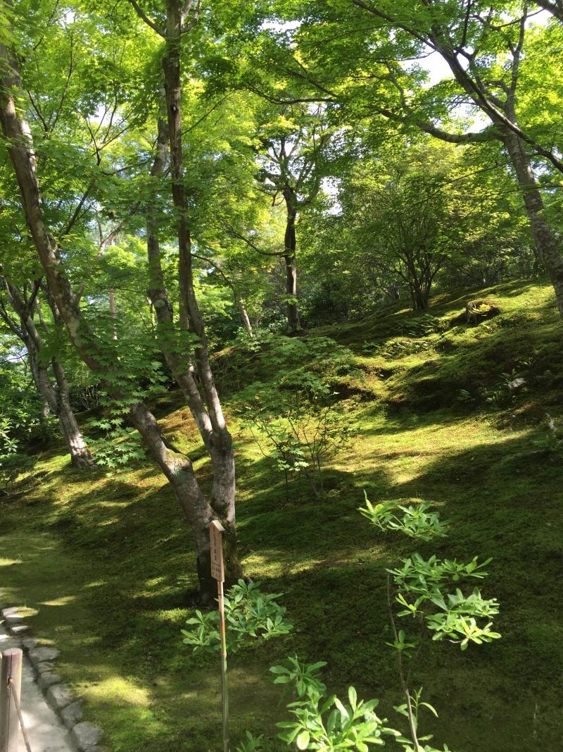 Moss covered ground in Tenryuji's garden