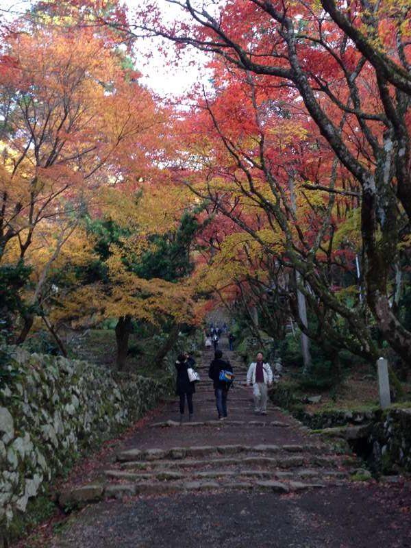 Autumnal Leaves at Keisoku-ji Temple (鶏足寺) [3 of 4]