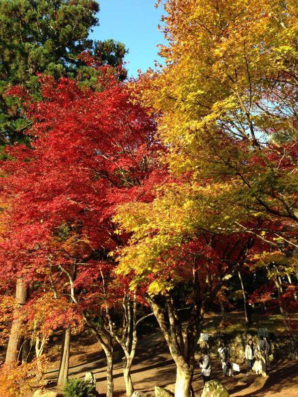 Autumnal Leaves at Keisoku-ji Temple (鶏足寺) [1 of 4]