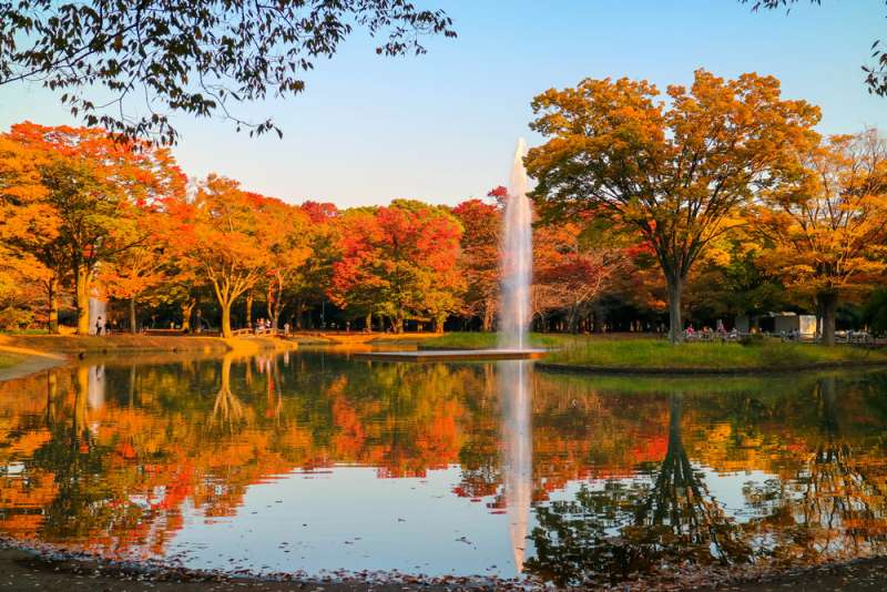 Autumn coloring in Yoyogi Park