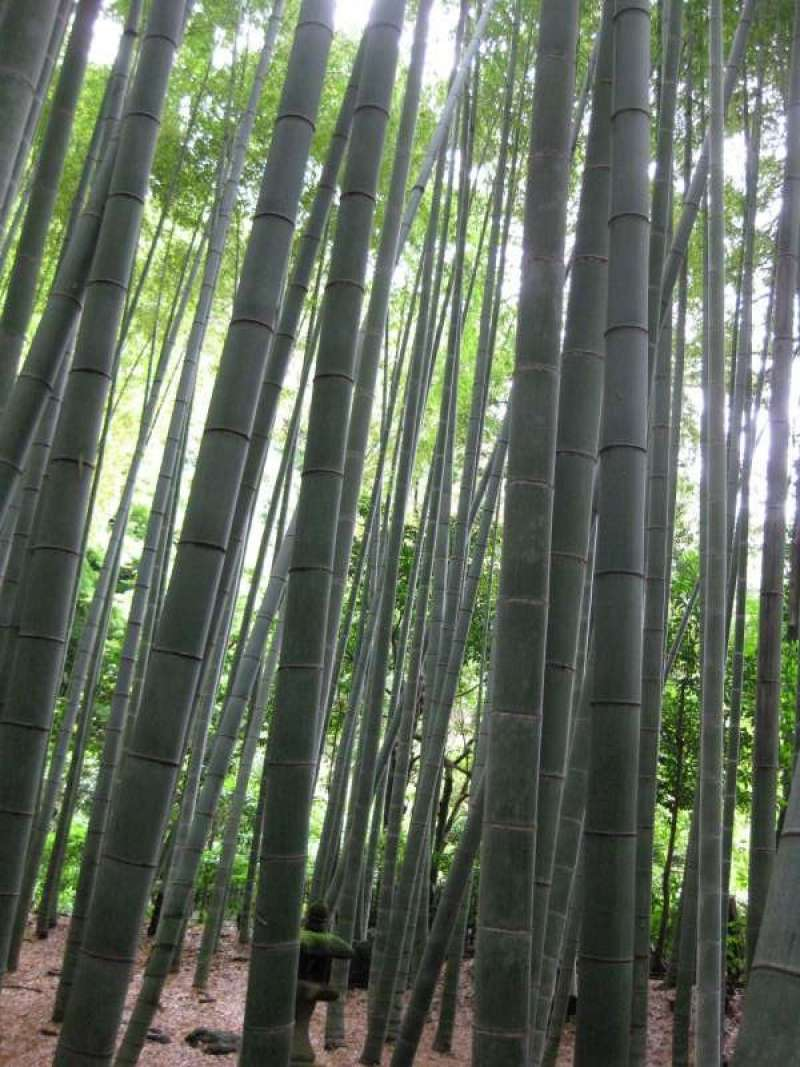 You can feel real calmness in the bamboo forest.