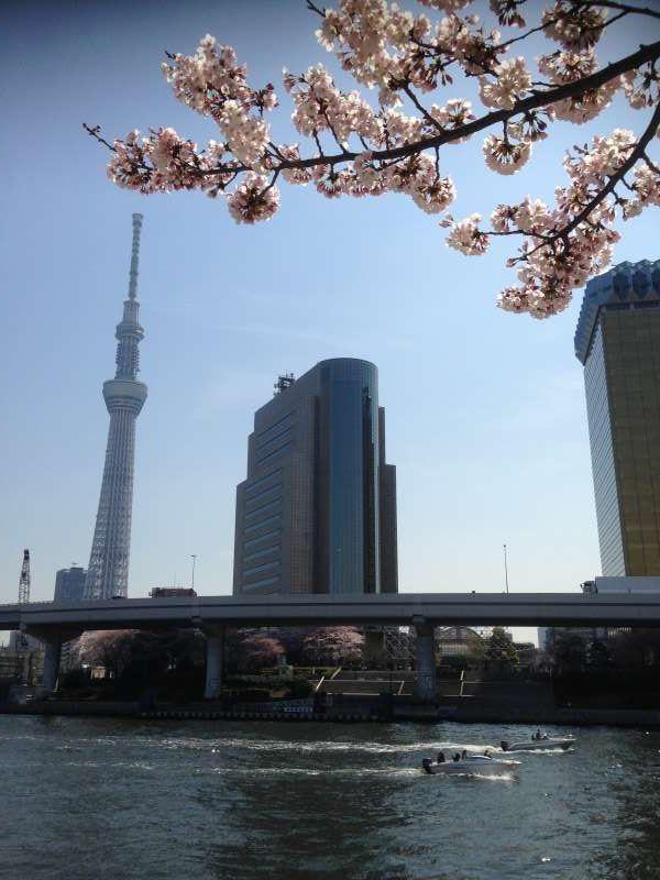 Skytree & Sumida Park in April