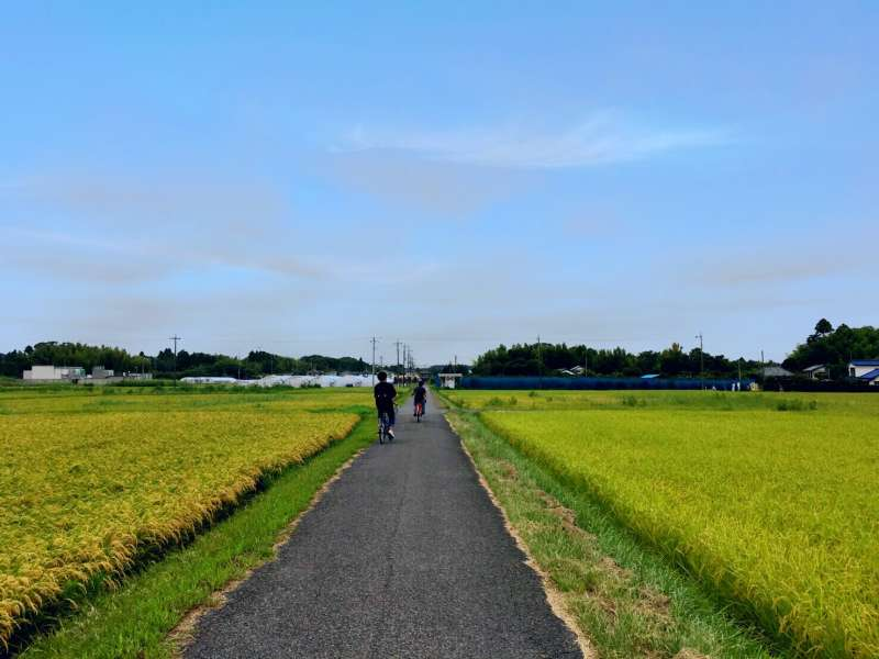 Cycling in rice fields